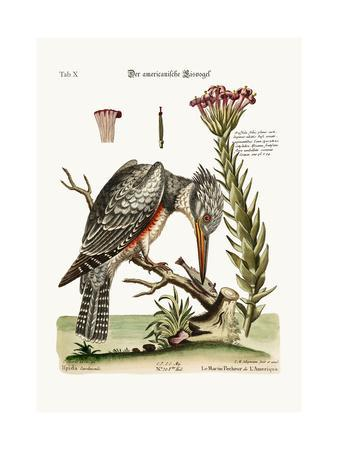 The American Kingfisher, 1749-73-George Edwards-Giclee Print