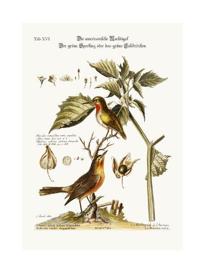 The American Nightingale. the Green Sparrow or Green Hummingbird, 1749-73-George Edwards-Giclee Print