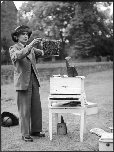 The Apiarist - a Bee Keeper Demonstrating the Examination of Frames of Brood--Photographic Print