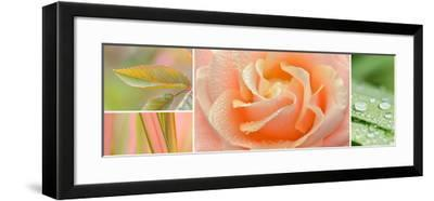 The Apricot Garden-Cora Niele-Framed Photographic Print