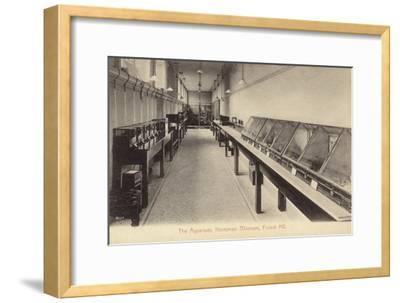 The Aquarium, Horniman Museum, Forest Hill, London
