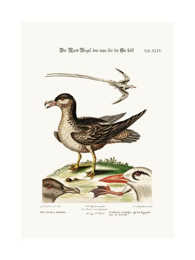 The Arctick Bird, Supposed to Be the Hen, the Tropick Bird, 1749-73-George Edwards-Giclee Print
