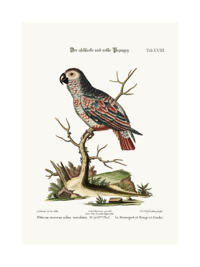 The Ash-Coloured and Red Parrot, 1749-73-George Edwards-Giclee Print