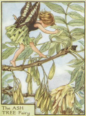 The Ash Tree Fairy