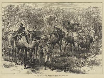 The Australian Exploring Expedition Travelling Through the Scrub--Giclee Print