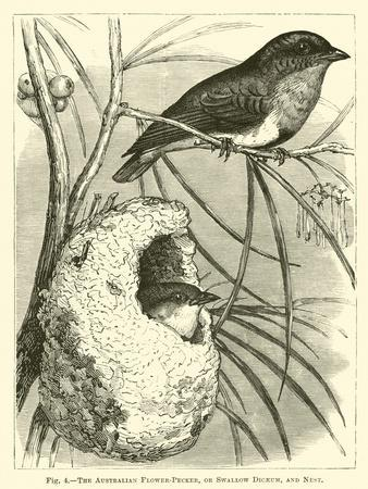 https://imgc.artprintimages.com/img/print/the-australian-flower-pecker-or-swallow-dicaeum-and-nest_u-l-ppwcbk0.jpg?p=0