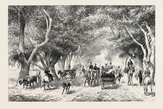 The Avenue at Shoobra, Egypt, 1879--Giclee Print