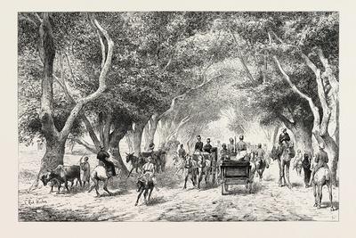https://imgc.artprintimages.com/img/print/the-avenue-at-shoobra-egypt-1879_u-l-pvelat0.jpg?p=0