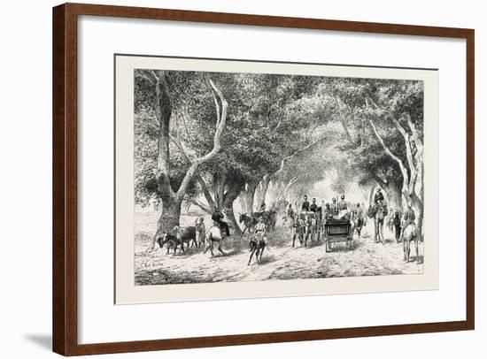 The Avenue at Shoobra, Egypt, 1879--Framed Giclee Print