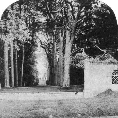 The Avenue, Guy's Cliff, Warwick, Early 20th Century--Photographic Print
