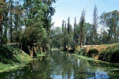 The Aztec Canals at the Floating Gardens of Xochimilco
