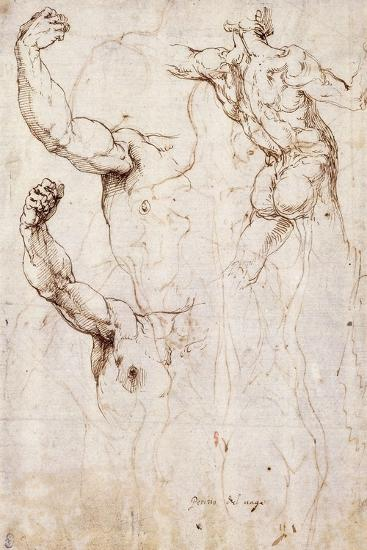The Back of a Nude and Two Studies of a Raised Arm and Shoulder, Seen from the Front-Perino Del Vaga-Giclee Print