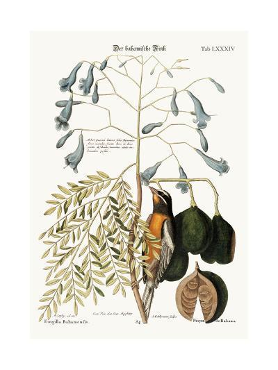 The Bahama Finch, 1749-73-Mark Catesby-Giclee Print