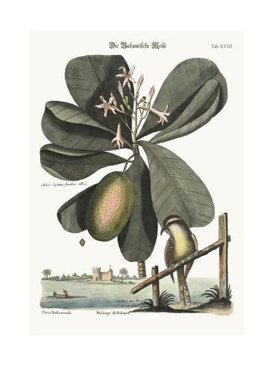 The Bahama Titmouse, 1749-73-Mark Catesby-Giclee Print