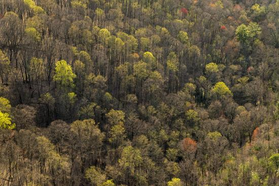 The Bald River Proposed Wilderness in Tennessee's Cherokee National Forest-Michael Melford-Photographic Print