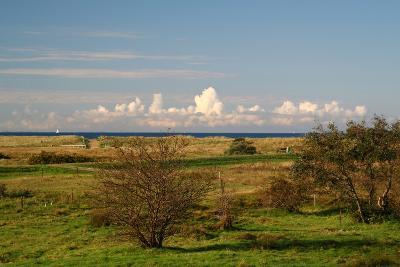 The Baltic Sea, Hiddensee, Heath, Landscape-Catharina Lux-Photographic Print