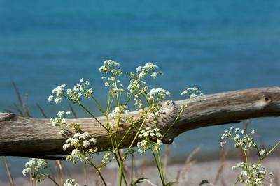 https://imgc.artprintimages.com/img/print/the-baltic-sea-r-gen-yarrow-in-front-of-blue-sea_u-l-q11vy620.jpg?p=0