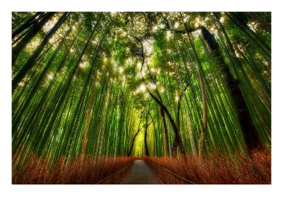 The Bamboo Forest-Trey Ratcliff-Premium Photographic Print