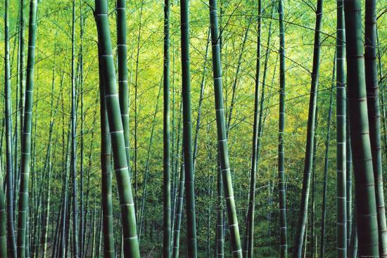 The Bamboo Grove-Robert Churchill-Art Print