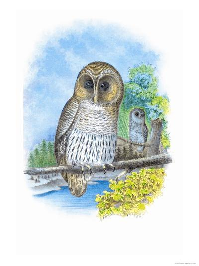 The Barred Owl-Theodore Jasper-Art Print