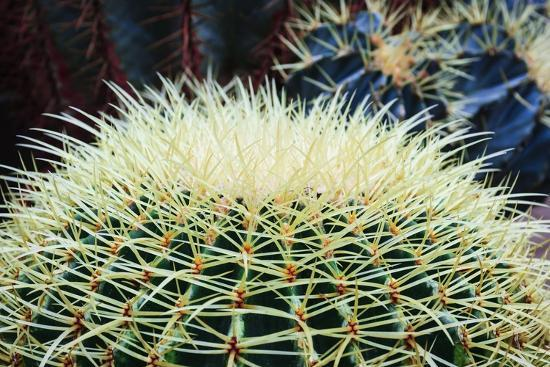 The Barrel Cactus-Anthony Paladino-Giclee Print