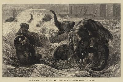 The Bathing Season at The Zoo, Pachyderms at Play--Giclee Print