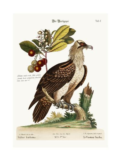 The Bearded Vulture, 1749-73-George Edwards-Giclee Print