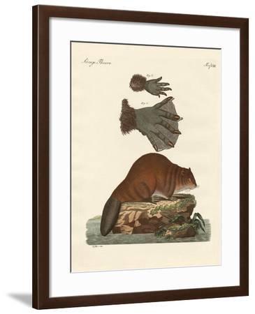 The Beaver--Framed Giclee Print