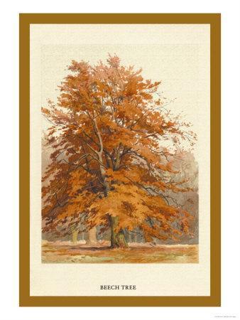 https://imgc.artprintimages.com/img/print/the-beech-tree_u-l-p27w6w0.jpg?p=0