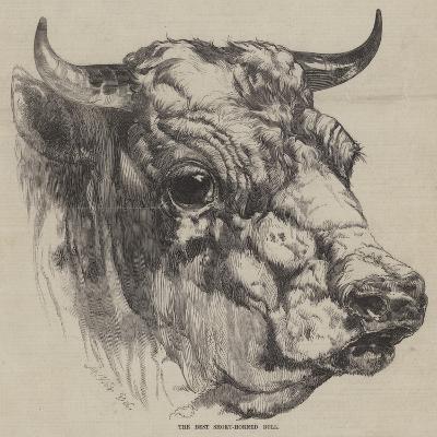The Best Short-Horned Bull-Harrison William Weir-Giclee Print