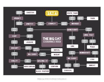The Big Cat Identification Chart-Stephen Wildish-Art Print