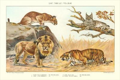 The Big Cats--Art Print