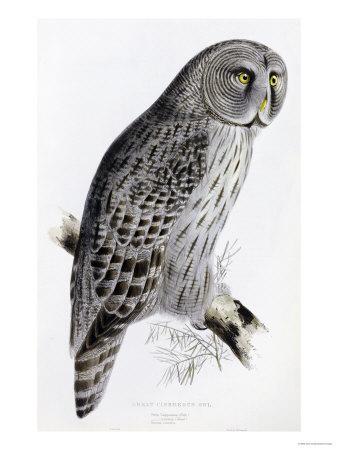 https://imgc.artprintimages.com/img/print/the-birds-of-great-britain-published-1862-1873_u-l-o63jt0.jpg?p=0