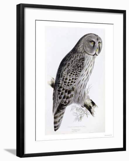 The Birds of Great Britain, Published 1862-1873-John Gould-Framed Giclee Print