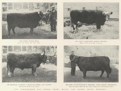 The Birmingham Fat Stock Show, Royal and Other Prize Winners--Giclee Print