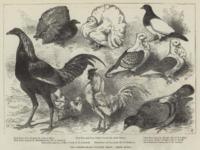 The Birmingham Poultry Show, Prize Birds-Harrison William Weir-Giclee Print