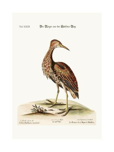 The Bittern from Hudson's Bay, 1749-73-George Edwards-Giclee Print