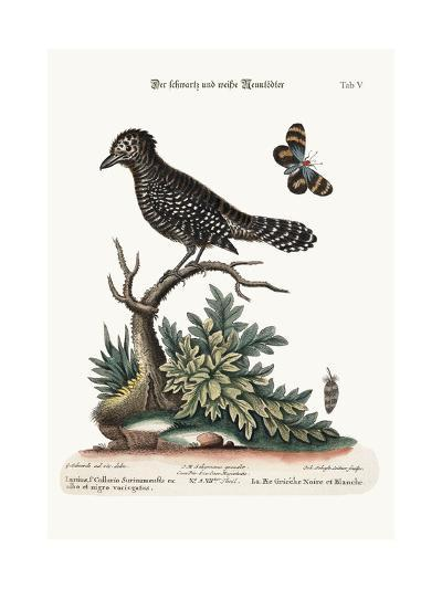 The Black and White Butcher-Bird, 1749-73-George Edwards-Giclee Print