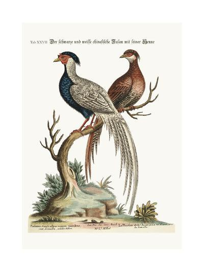 The Black and White Chinese Cock Pheasant with its Hen, 1749-73-George Edwards-Giclee Print