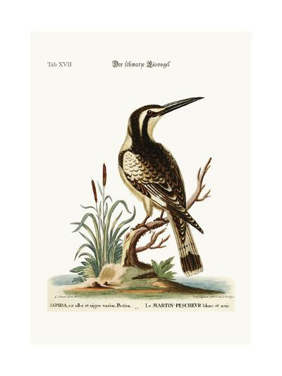 The Black and White Kingfisher, 1749-73-George Edwards-Giclee Print
