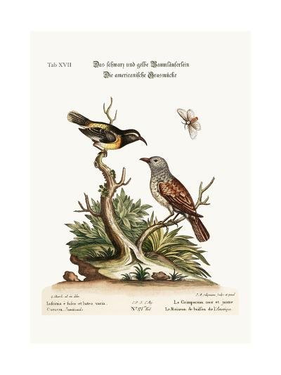 The Black and Yellow Creeper. the American Hedge-Sparrow, 1749-73-George Edwards-Giclee Print