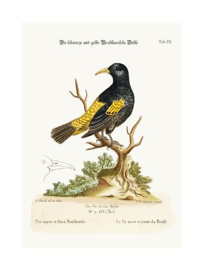 The Black and Yellow Daw of Brasil, 1749-73-George Edwards-Giclee Print