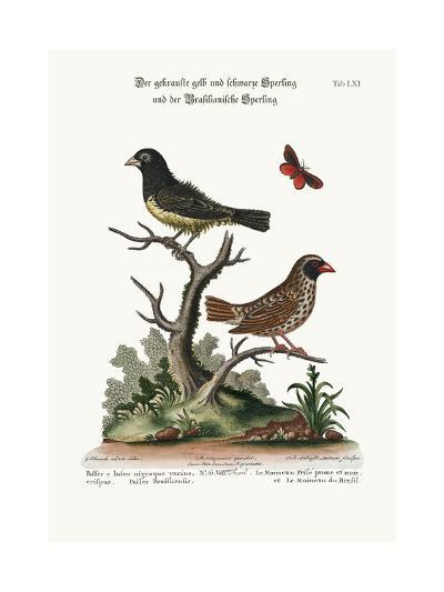 The Black and Yellow Frizled Sparrow, and the Brasilian Sparrow, 1749-73-George Edwards-Giclee Print