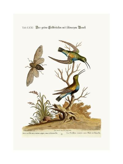 The Black-Bellied Green Hummingbird, 1749-73-George Edwards-Giclee Print