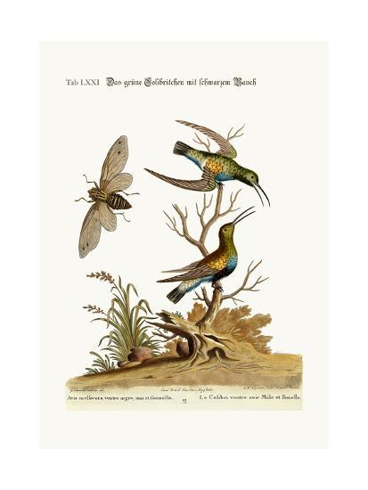 The Black-Bellied Green Hummingbird, 1749-73-George Edwards-Giclee Print