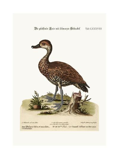 The Black-Billed Whistling Duck, 1749-73-George Edwards-Giclee Print
