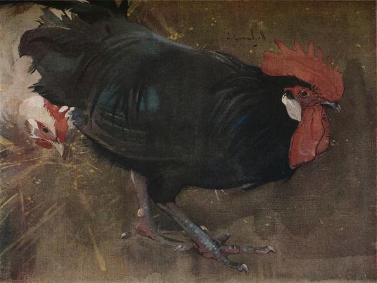 'The Black Cock', c1894-Joseph Crawhall-Giclee Print