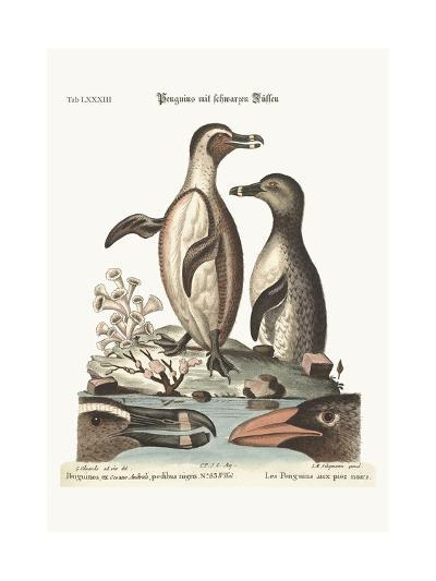 The Black-Footed Penguins, 1749-73-George Edwards-Giclee Print