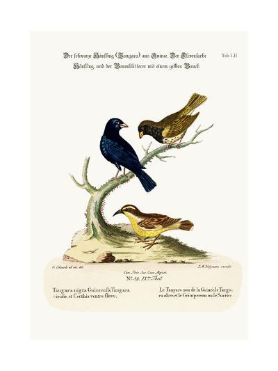 The Black Linnet, the Olive-Coloured Linnet, and the Yellow-Bellied Creeper, 1749-73-George Edwards-Giclee Print