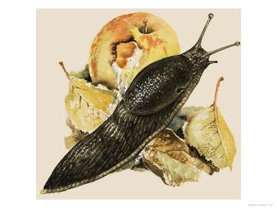 The Black Slug--Giclee Print
